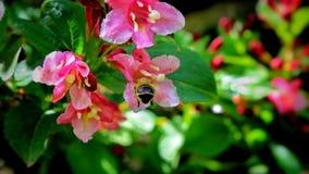 La naturaleza está despertando en la estación de primavera Imagenes de archivo
