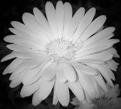 La naturaleza florece el primer de la planta al aire libre Imagen de archivo