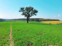 La naturaleza hermosa, granja del verano, verano archivó, verano en Luxemburgo, Europa Foto de archivo libre de regalías