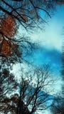 La naturaleza hermosa ramifica los árboles desde arriba y fondo del cielo azul Foto de archivo