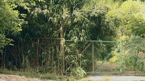 La naturaleza salvaje es selva fascinadora Imagen de archivo