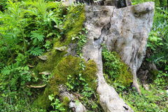 La naturaleza salvaje es selva fascinadora Imagenes de archivo