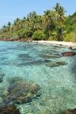 La naturaleza tropical Imagen de archivo libre de regalías