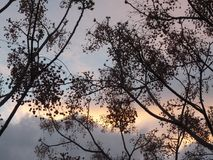 La naturaleza va a dormir Foto de archivo libre de regalías