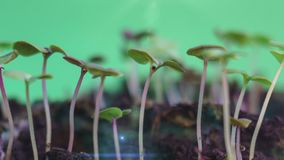 La naturaleza verde maravillosa de la germinación planta los brotes de la evolución de la semilla que crece en el concepto de la  almacen de video