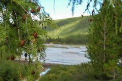 La naturaleza virginal de Altai - Siberia AKTRU foto de archivo libre de regalías