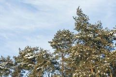 La naturaleza y las estaciones Foto de archivo libre de regalías