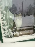 La nature, animal, neige, choie la région sauvage d'hiver Image libre de droits