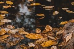 La nature d'automne laisse 2g jaune photographie stock libre de droits