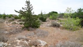 La nature de l'île de la Chypre en novembre banque de vidéos
