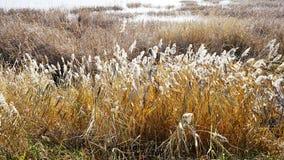 La nature de l'automne de la Sibérie Photographie stock libre de droits
