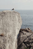 La nature de la Crimée Photo libre de droits