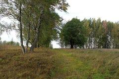 La nature de la Russie centrale, au début de l'automne Excellente illustration photo stock