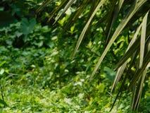La nature est l'une de nos vies Photographie stock libre de droits