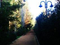 La nature est si belle avec des arbres partout en parc linéaire de Nicosie en Chypre Images stock