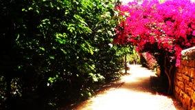 La nature fleurit en parc linéaire de Nicosie en Chypre Image stock