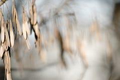 La nature a illuminé 6 Image libre de droits