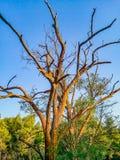 La nature même si elle est morte, est encore belle Photo libre de droits
