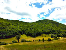 la nature opacifie l'herbe de vert forêt en bois Images libres de droits