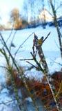 La nature pendant l'hiver Photographie stock libre de droits