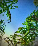 La nature porte toujours les couleurs de l'esprit photo libre de droits