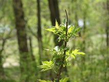 La nature pousse en bois de temps beau de la jeune Image libre de droits