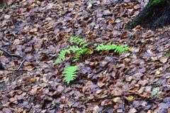 La nature réveille l'automne chaud en retard Photos stock