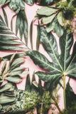 La nature verte avec de diverses feuilles tropicales avec de l'eau chute sur le fond pâle rose photo stock