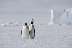 La Navidad antártica fotografía de archivo