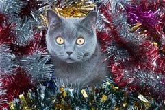 La Navidad británica del gato Foto de archivo libre de regalías