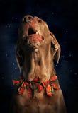 La Navidad con el perro Foto de archivo libre de regalías