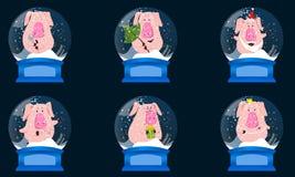 La Navidad Crystal Snow Ball fijado con los cerdos lindos El símbolo de los nuevo 2019 años chino Ejemplo del vector en blanco ilustración del vector