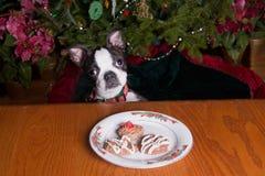 La Navidad de Poopsie por favor puede yo comer una galleta Fotografía de archivo libre de regalías
