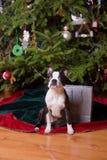 La Navidad de Poopsie que se sienta por el bolso del regalo Imagen de archivo libre de regalías
