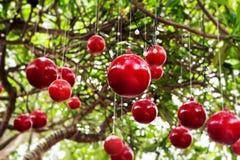 La Navidad, decoración del árbol del Año Nuevo con las bolas rojas Imágenes de archivo libres de regalías