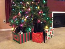 La Navidad del gato Fotografía de archivo
