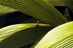 La Navidad del lagarto Fotos de archivo