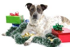 La Navidad del perrito Imágenes de archivo libres de regalías