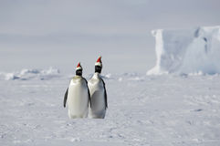 La Navidad en Ant3artida Foto de archivo libre de regalías