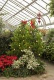 La Navidad en el invernadero imagen de archivo