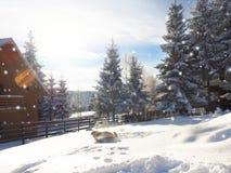 La Navidad Fondo del Año Nuevo Vacaciones de invierno Imagenes de archivo