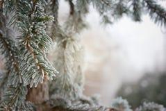 La Navidad, fondo del invierno con el árbol de pino escarchado Fotografía de archivo
