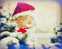 La Navidad Kitten Sleeping foto de archivo libre de regalías
