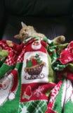 La Navidad Kitty Foto de archivo
