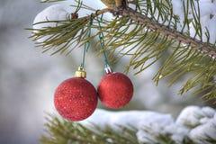 La Navidad roja juega la ejecución en la rama verde del pino, en un nevoso Fotografía de archivo