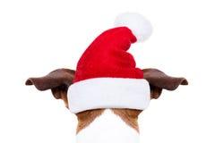 La Navidad Santa Dog fotografía de archivo