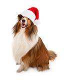 La Navidad Santa Shetland Sheepdog imágenes de archivo libres de regalías