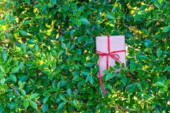 La Navidad y la Feliz Año Nuevo para el regalo en el arbusto verde deja el fondo de la pared Fotos de archivo