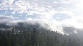 La nebbia aumenta sopra la foresta video d archivio