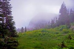 La nebbia copre i Wildflowers che coltivano il Glacier National Park immagine stock